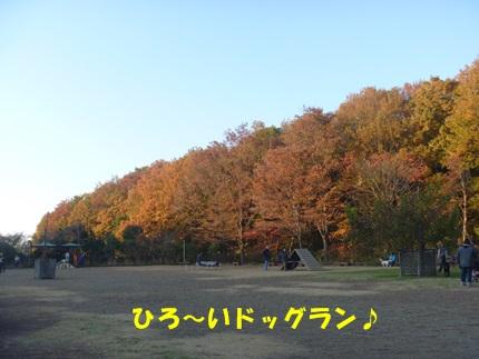 P1020966.jpg