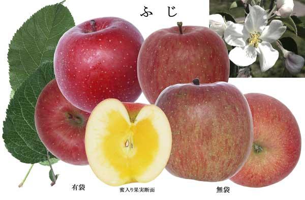 huji20131226.jpg