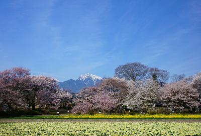 山高神代桜周辺