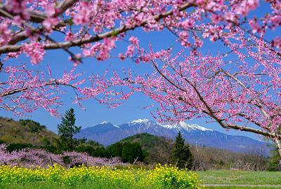 新府の桃と八ヶ岳