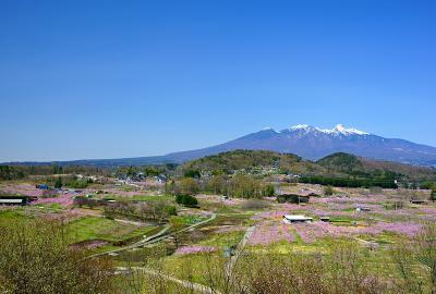 新府城址から見る桃畑と八ヶ岳