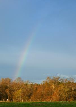 rainbow120501_01.jpg