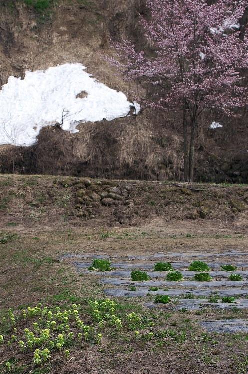 残雪の雨飾高原 二