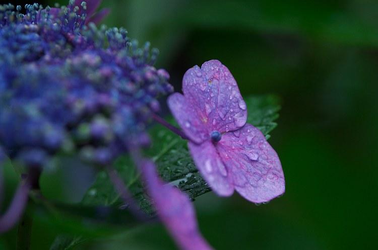雨の休日 3