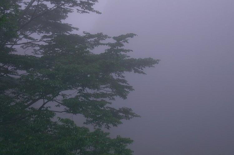 靄煙る秋葉神社 七 ~秋葉の杜(もり)~
