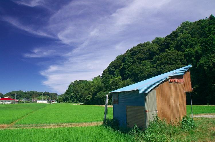 青い小屋のある風景