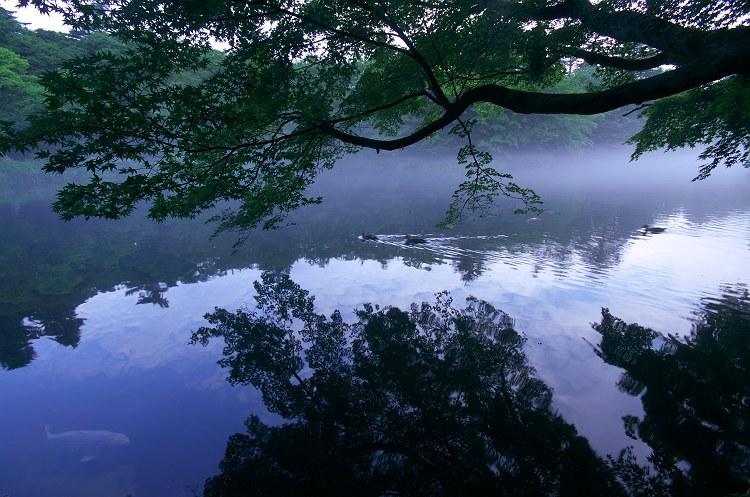 雲場池の朝