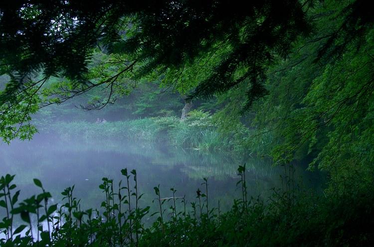雲場池の朝 2