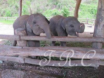 国立象研究所(タイ象保護センター)