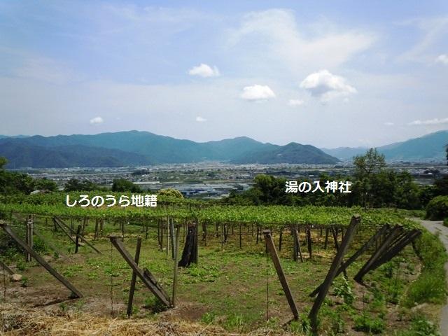 湯の入神社砦 (19)