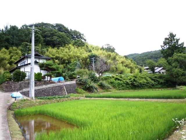 芦田城② (1)