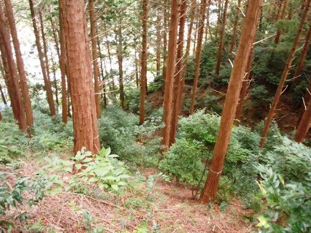 朝日山城(遠州) (8)