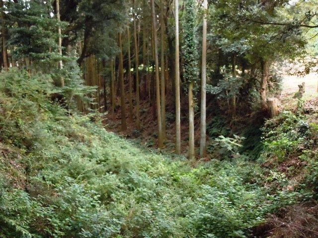 諏訪原城(遠江) (58)