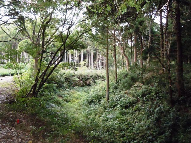 諏訪原城(遠江) (111)