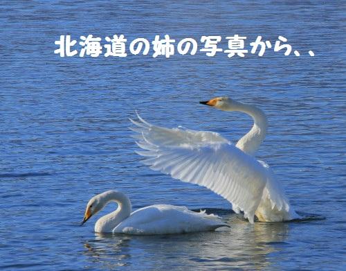 DPP_0001_1.jpg