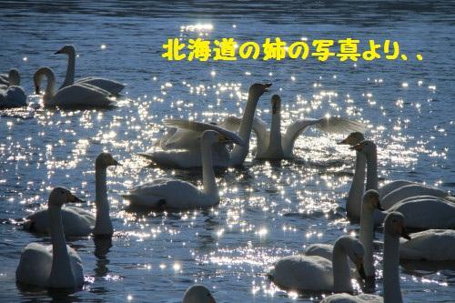 IMG_9970.jpg