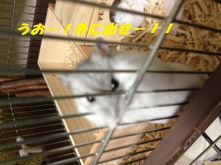 IMG_0861_convert_20121109233010.jpg