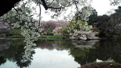 120413新宿御苑 (64)