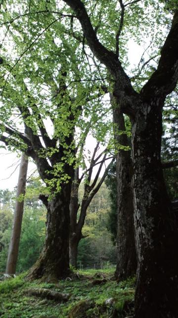 120508諏訪神社ツアー (104)