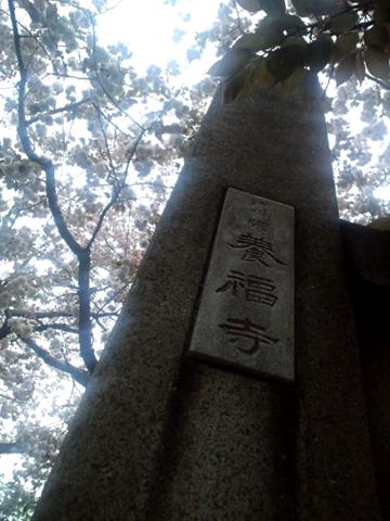 120420谷中 (37)