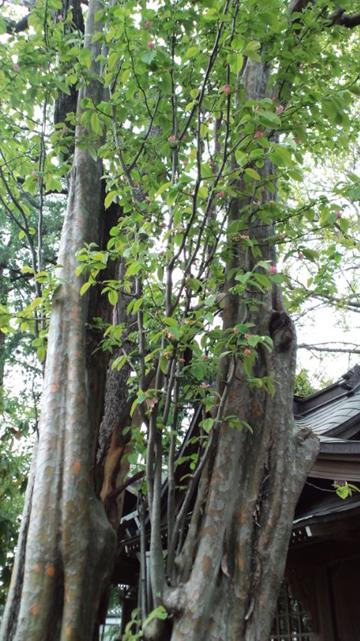 120425葛西 半田稲荷神社 (24)