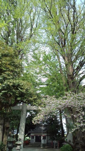 120425葛西 半田稲荷神社 (38)