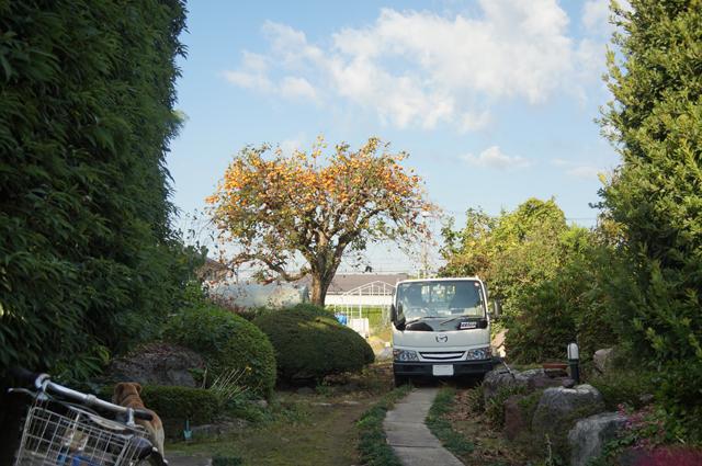 マツダタイタンと柿の木