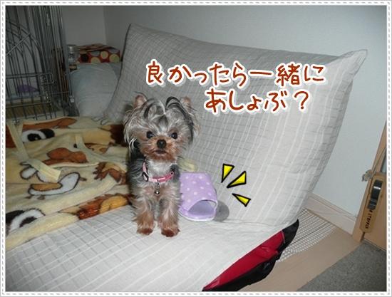 続スリッパ③