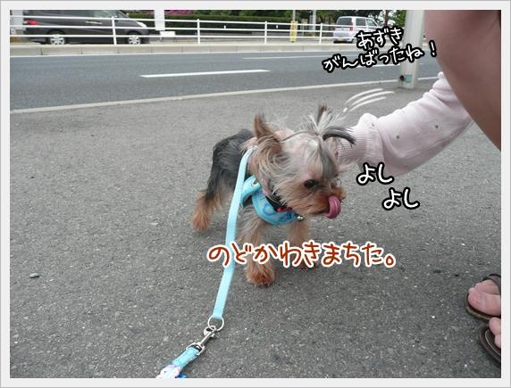あずき2 (2)