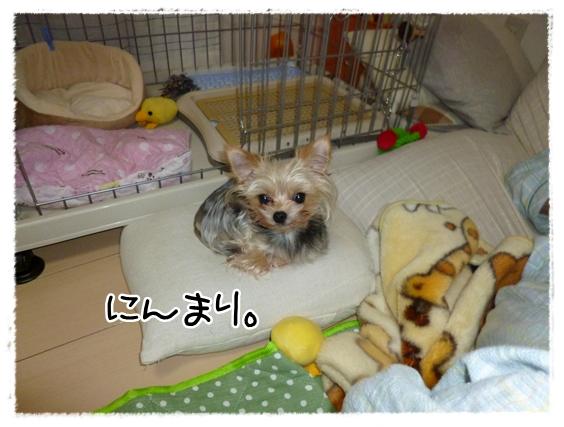 モコ3 (2)
