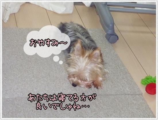 モコ2 (2)