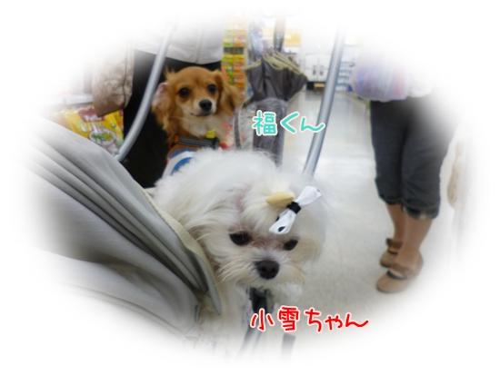 小雪ちゃん&福くん