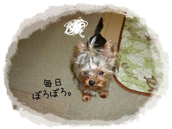 あずき1 (2)