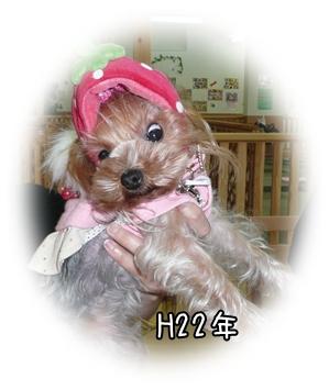 ティーちゃん(H22年)