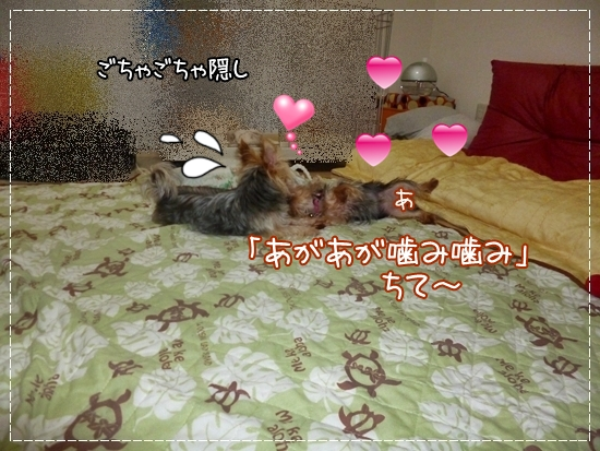 あずき&モコ15