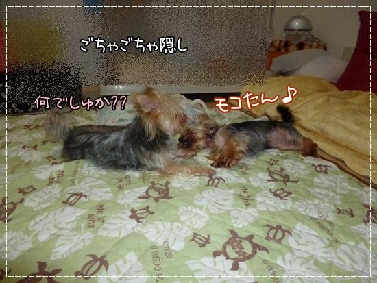 あずき&モコ14