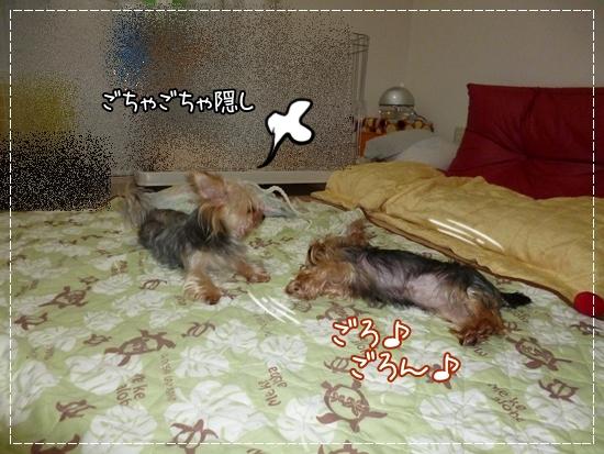 あずき&モコ13