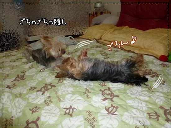 あずき&モコ12