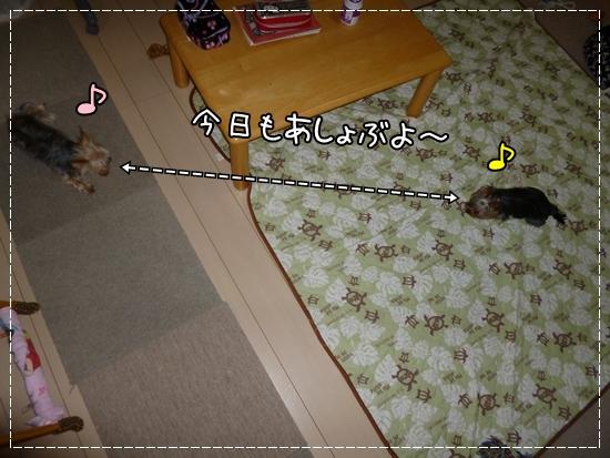 あずき&モコ1