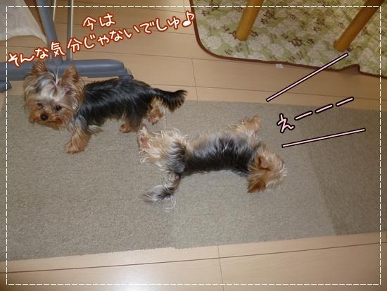 あずき&モコ5