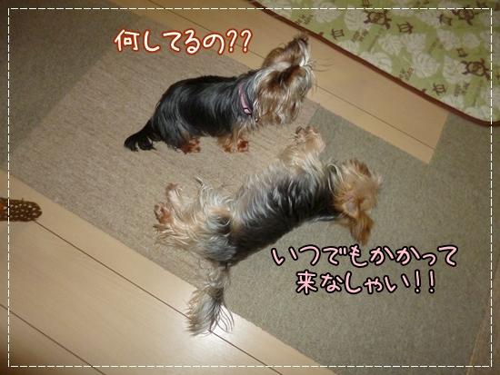 あずき&モコ4