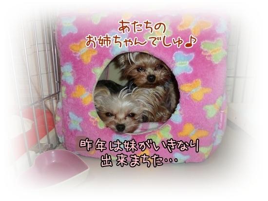 あずモコ (4)