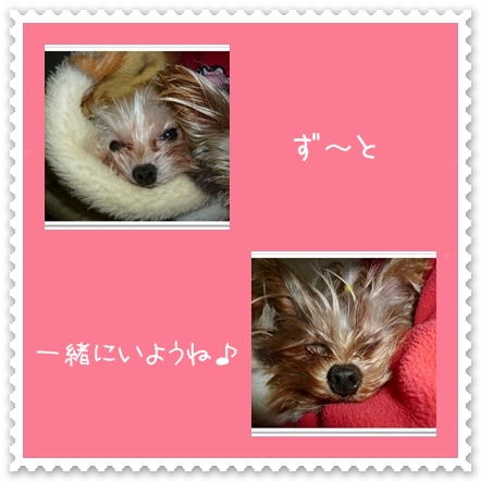azumoko.jpg