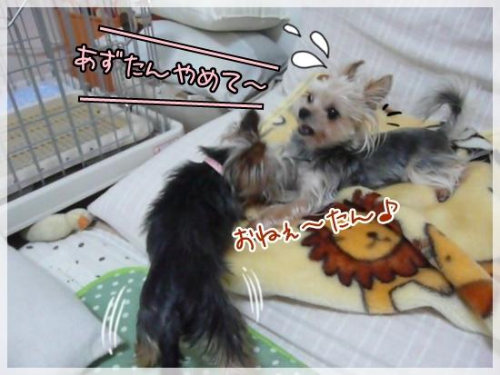 azumoko1.jpg