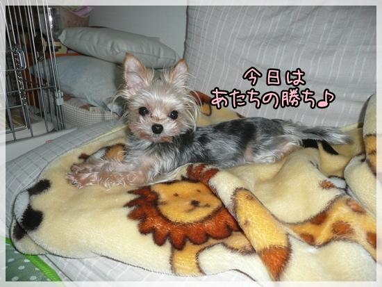 moko2_20120613202118.jpg