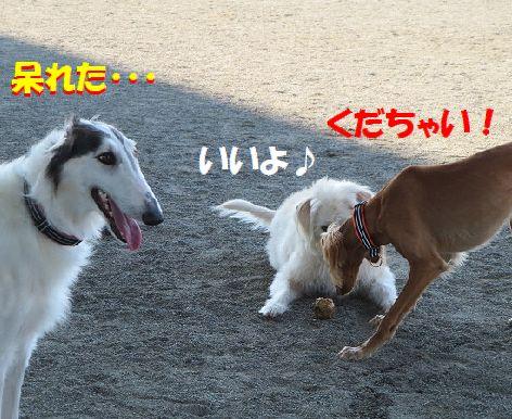 d_20131209191721f57.jpg