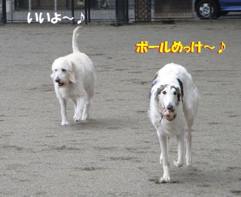 d_2013122200554807d.jpg