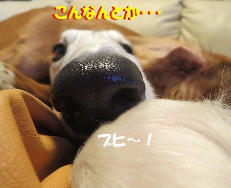 f_2013120709191968d.jpg