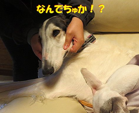 i_201312061821463b0.jpg