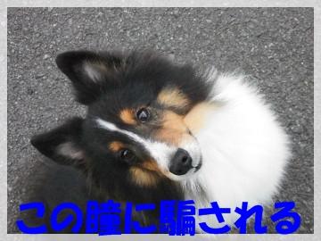 sCIMG0243.jpg